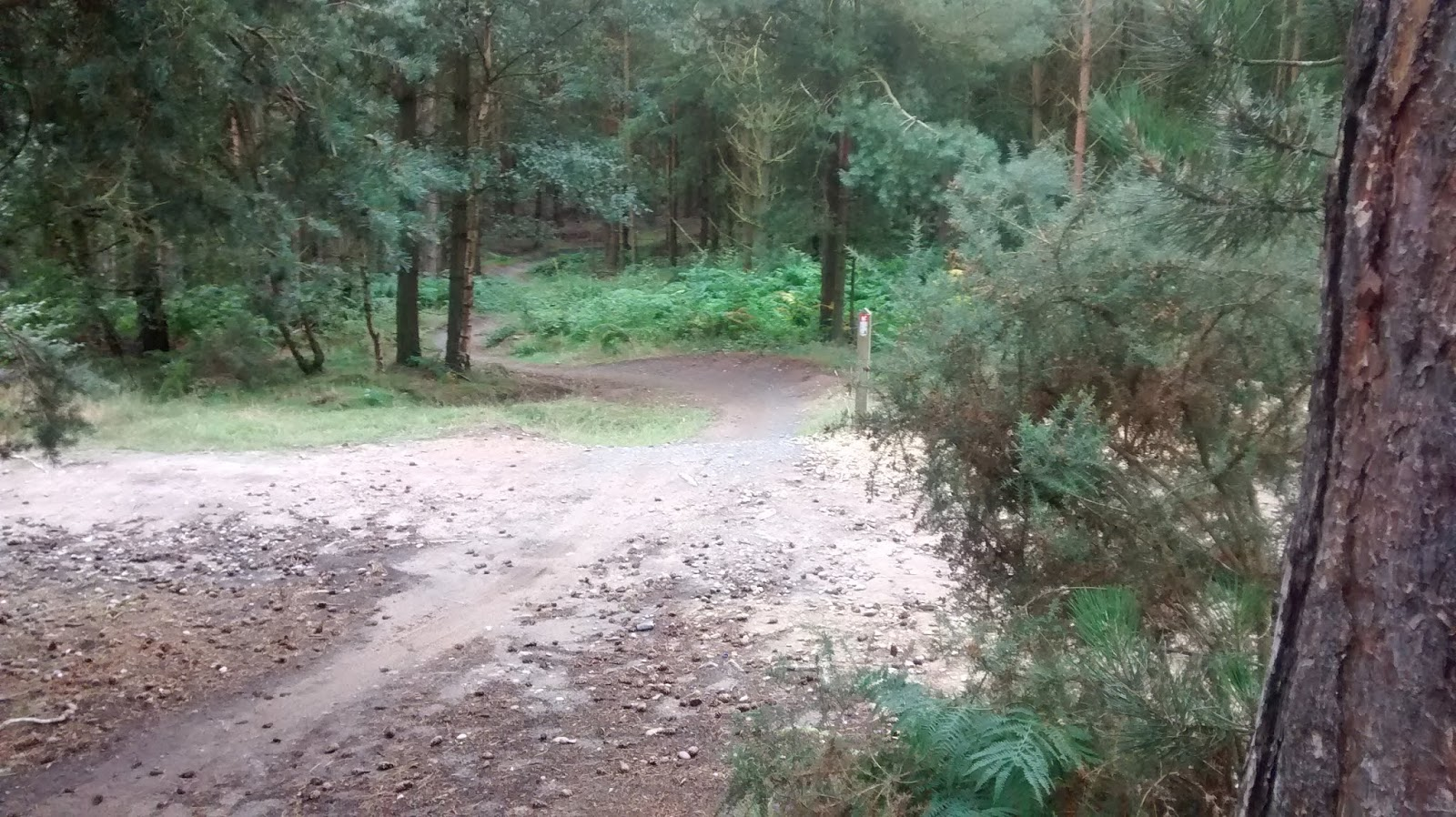 Single track section at the Kitchener trail Sherwood pines- by: © Paul c Walton