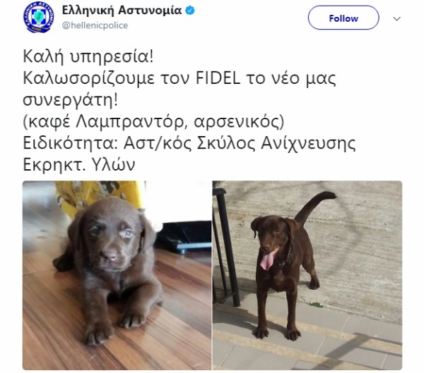 FIDEL o τετράποδος συνεργάτης της Ελληνικής Αστυνομίας!!!