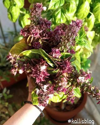 Μυρωδιά από Βασιλικό, Kalli's blog