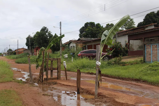 Moradores plantam pés de bananas em buracos de ruas de Guajará-Mirim