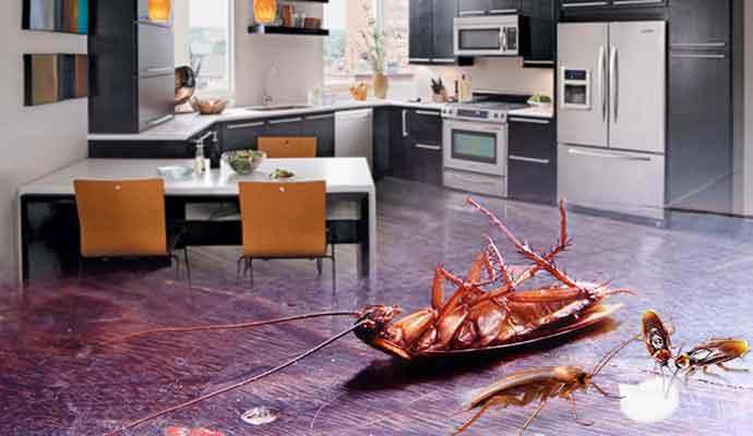 Ways to kill cockroaches