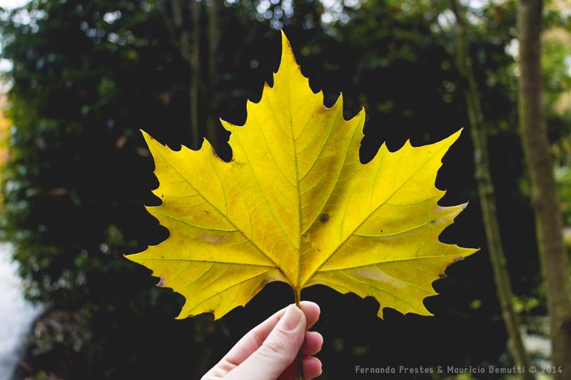 Folha de outono Luxemburgo