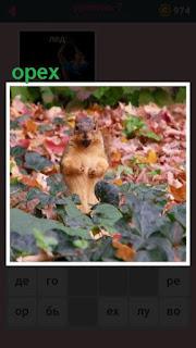 в листьях на земле сидит зверек и держит орех в лапках