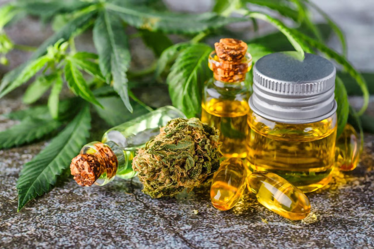 Know More Information about CBD Oil for Dogs