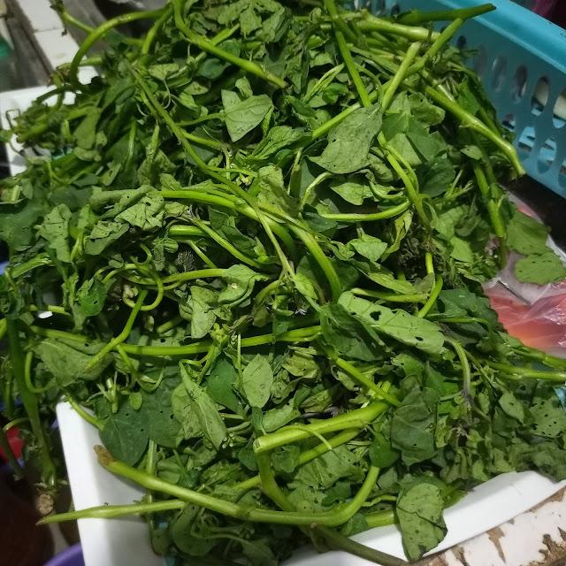njama njama, vegetables, huckleberry, cameroonian food, khati khati