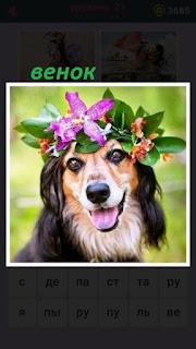 сидит собака на голове у которой имеется венок из цветов