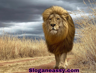Essay on lion