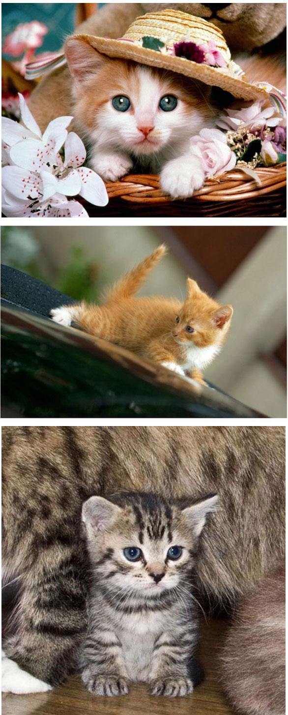 Gambar Kucing Garong godean.web.id