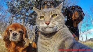 download nada dering whatsapp hewan