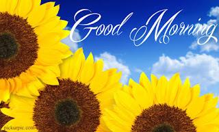 chào buổi sáng tươi đẹp