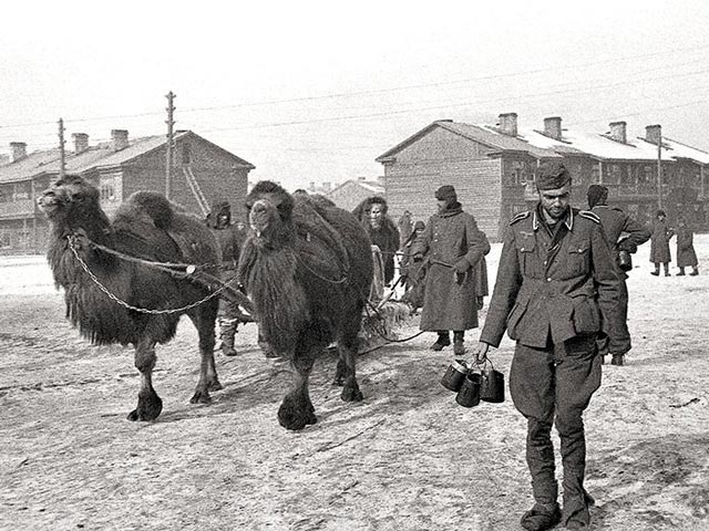 Germans using camels as pack animals at Stalingrad worldwartwo.filminspector.com