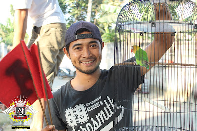 pemenang lovebird bebas m3
