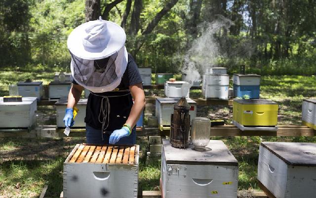 Ιερή κόντρα: 25 χιλιάδων Ελλήνων μελισσοκόμων με τον Μητροπολίτη Αργολίδος Νεκτάριο