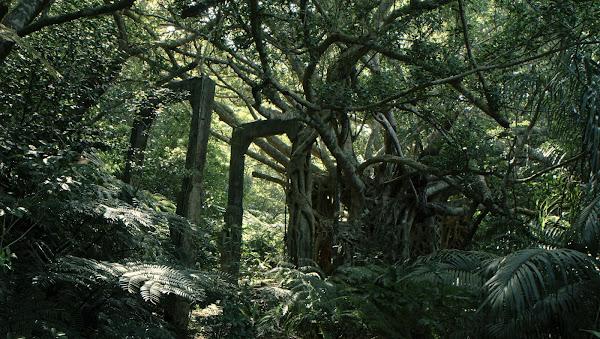 【綠色牢籠】劇照_位於⽇本沖繩的⻄表島 戰前是惡名昭彰的「死⼈島」與「炭坑村」