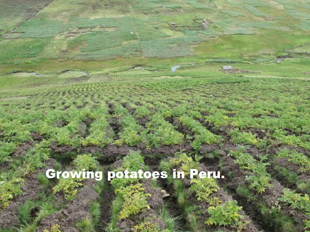 """Latin America and the Caribbean are """"pillar for world food security"""""""