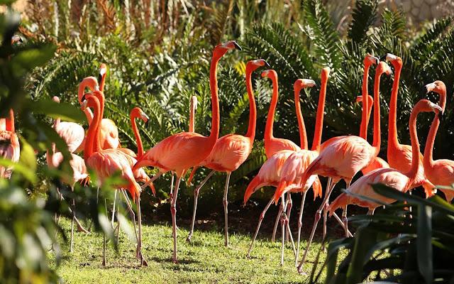 Jungle Island Miami (Florida), USA