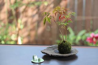 石のお皿の上のハゼノキの苔玉とカエルの置物