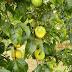 Seag e Incaper realizam capacitação on-line sobre cultivo do maracujá