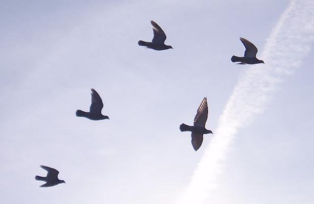 Kuşların Göç Etme Sebepleri Nelerdir?