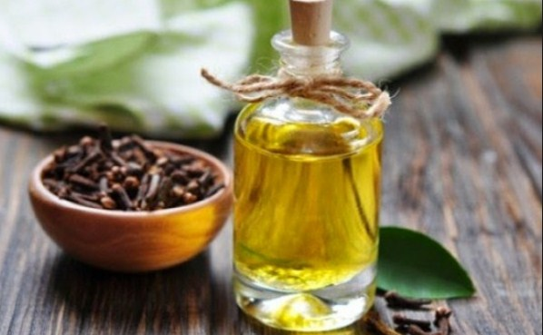 Sejuta Manfaat Minyak Cengkeh untuk Kesehatan