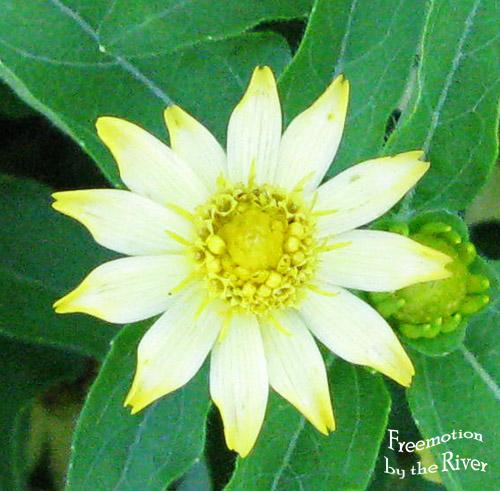 Flower enhanced in Photoshop
