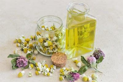 10 Tanaman Hias Yang Dapat Digunakan Sebagai Obat Herbal