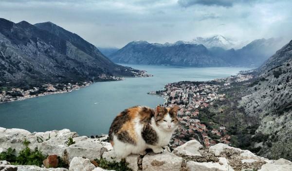 montenegro cats