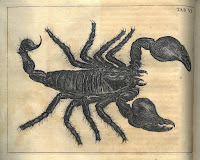 Engraving of a scorpion
