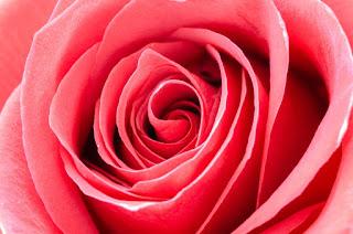 whatsapp profile flowers dp, flower love whatsapp dp,