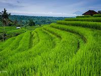 Pertanian Adalah Potensi Yang Tersembungi Dari Gunung Kidul