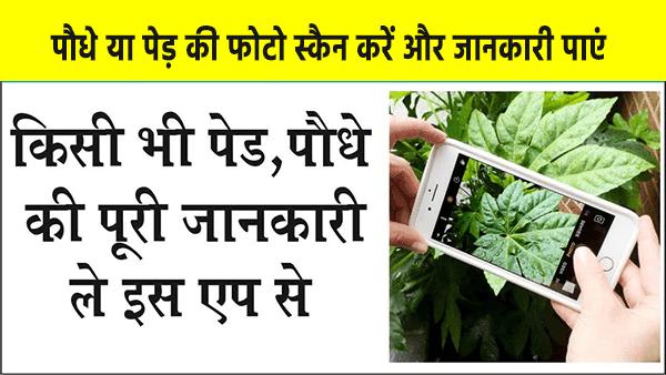पौधे या पेड़ की फोटो स्कैन करने से मिलेगी पूरी जानकारी