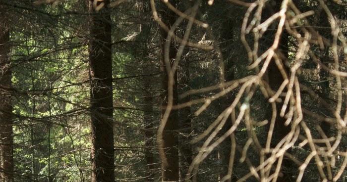 Metsä Runo