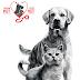 Royal Canin Galak Pemilik Kucing Rancang Lawatan Ke Klinik Veteriner Lebih Awal Dalam Tempoh PKP