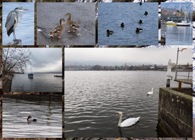 Birdwatching on Zurich See in winter
