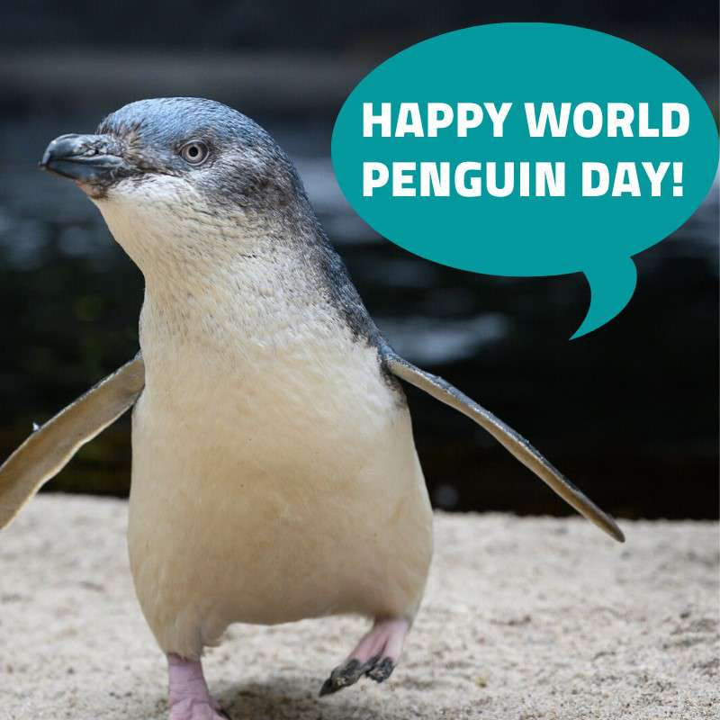 National Penguin Day Wishes Awesome Picture