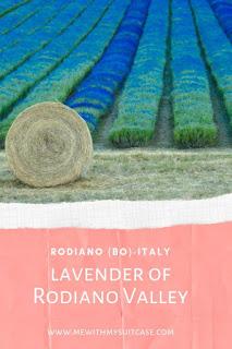 Lavanda di Rodiano