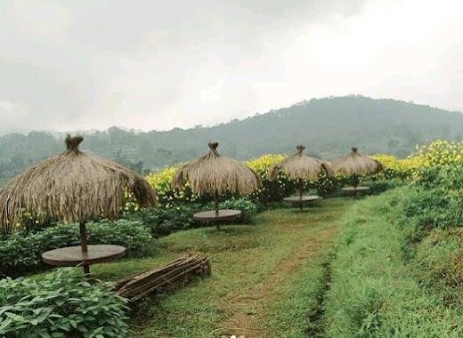 Kampung Organik Brenjonk Mojokerto