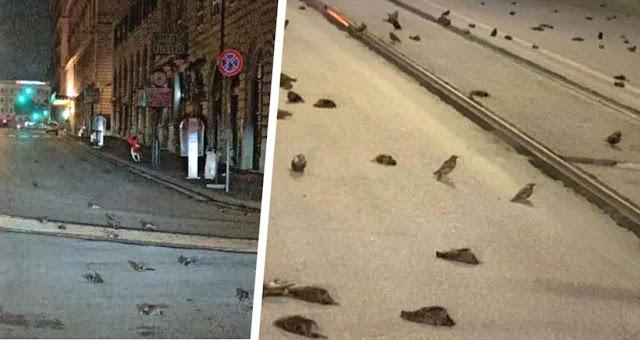 Сотни птиц погибли в Риме из-за праздничных фейерверков