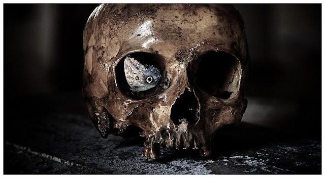 Στοιχεία για άγνωστα «αρχαϊκά» φανταστικά ανθρώπινα είδη