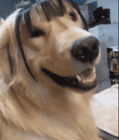 Top 500 Funny Fancy Dog Names For Male And Female (August 2019
