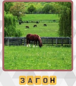 в загоне на зеленой лужайке пасется одинокая лошадь