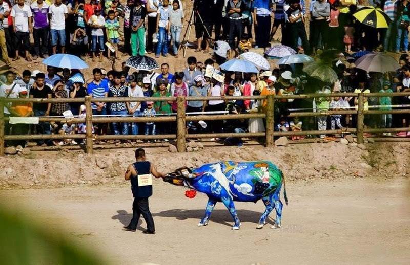 Buffalo Body-Painting Competition, China