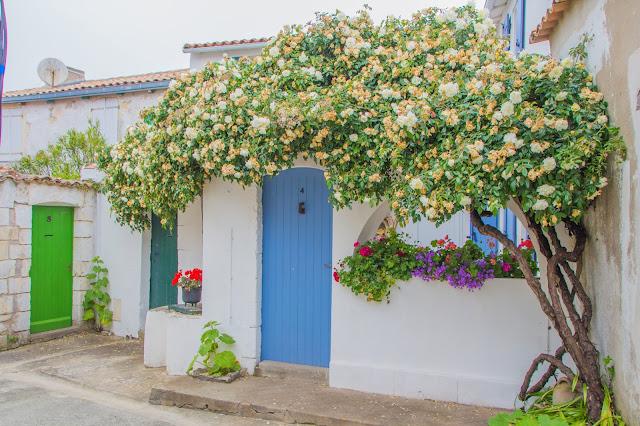 L'île de Ré en fleurs
