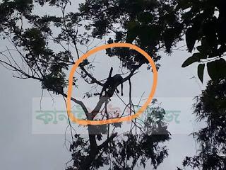 কানাইঘাটে ডাল কাটতে উঠে গাছেই কিশোরের মৃত্যু