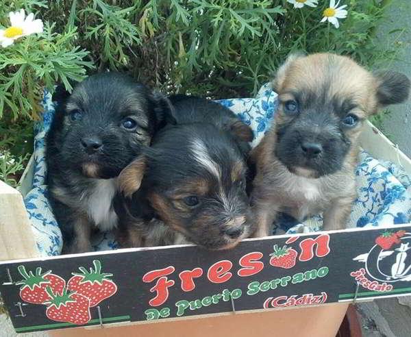 cachorros talla pequeña