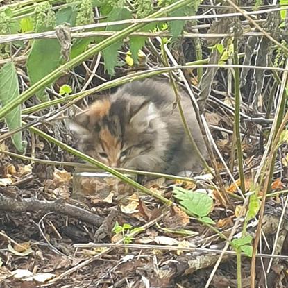 tabby kitten among some long grass