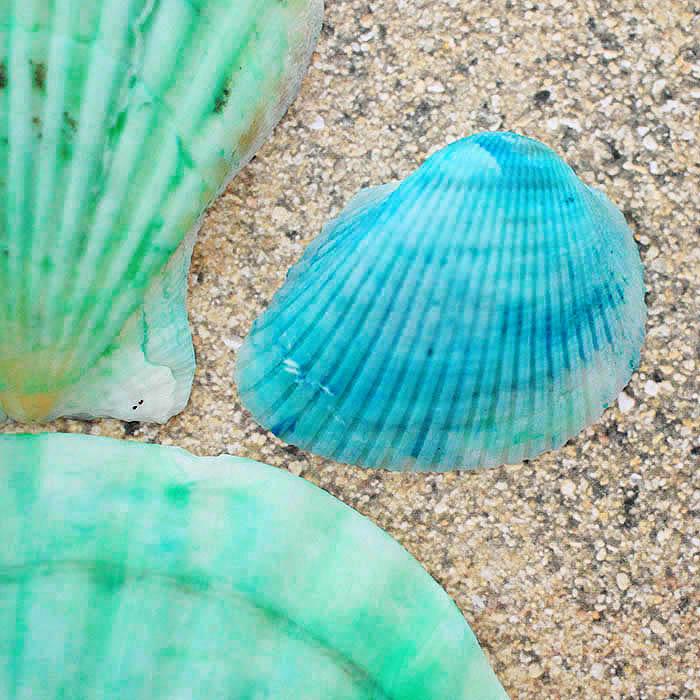 Hw to Dye Seashells