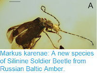 https://sciencythoughts.blogspot.com/2018/07/markus-karenae-new-species-of-silinine.html