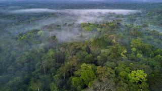أراضى غابات الأمازون