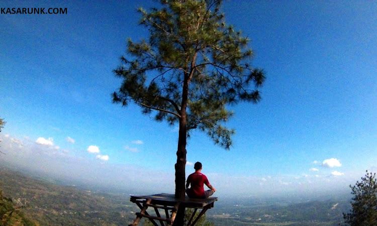 Sejuknya Hutan Pinus di Bukit Becici Gunung Kidul Jogjakarta